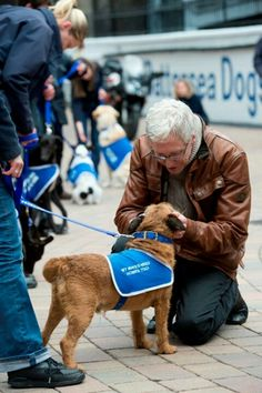New series Paul O'Grady Love of dogs being filmed. New Series, Make Me Smile, Animal Rescue, Dog Cat, Lovers, Tv, My Love, Dogs, Animal Welfare