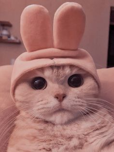 Cute Baby Cats, Cute Little Animals, Kittens Cutest, Cats And Kittens, Cute Cat Memes, Cute Cat Wallpaper, Cat Icon, Cat Aesthetic, Cute Animal Photos