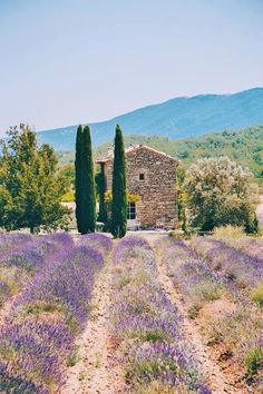 In Provence, France.