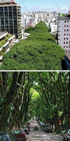 en Porto Alegre, Brasil. En Rua Gonçalo de Carvalho han logrado emular lo más natural y básico de la naturaleza a lo largo de 500 metros de puros árboles en una verdadera selva dentro de la ciudad. Más de 100 árboles de tipuana bordean la calle, formando una especie de túnel verde de 3 cuadras de largo.