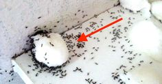 One woman discovered that by performing this simple trick, she could get rid of all those annoying sugar ants. It's pretty easy, and very clever. Sugar Ants, Get Rid Of Ants, Pest Control, Good To Know, Cleaning Hacks, Helpful Hints, Diy And Crafts, Life Hacks, Homemade