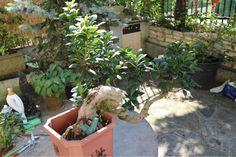 Hey! Guardate come è bella la mia pianta anche grazie al mio Parrot Flower Power! #bonsai #parrot