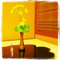 152- @milkapump 「咲くや一輪」 山口市菜香亭にて #30jc #juicnow #yamaguchi