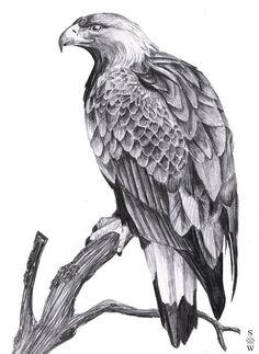 Golden Eagle by Glaiceana on DeviantArt