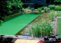 natural swimming-pool : how to built it