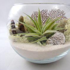 Sea Side Air Plant Terrarium // Desktop Terrarium by seaandasters