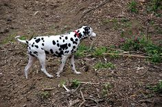 """How to Make """"101 Dalmations"""" Costumes"""