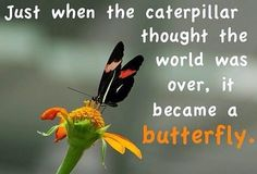 Butterflies, Changing World. Just when the caterpillar thought the world was over, it became a butterfly. > Freedom Quotes with Pictures. Butterfly Facts, Butterfly Quotes, Butterfly Kisses, Butterflies, Caterpillar Quotes, Sign Quotes, Funny Quotes, Quotable Quotes, Bible Quotes
