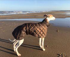 9e3a85123f3d2 Greyhound waterproof winter coats fleece lined with short neck Whippet Dog