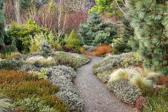 This is a winter garden at Rosemoor, Devon.