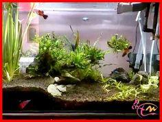 Tips Membuat Akuarium Air Tawar Sederhana  Akuarium pasti sudah diketahui oleh setiap orang tentang fungsi dan apa yang ditawarkannya,karenanya banyak yang mencari tips membuat akuarium air tawar agar bisa membuatnya sendiri.  Selengkapnya: http://akvodecor.com/tips-membuat-akuarium-air-tawar-sederhana/