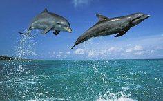 Dolphins :)    Google Image Result for http://2.bp.blogspot.com/-3pN63zwDTME/T0QHudlsRZI/AAAAAAAAAk0/lstLNHZ5ejM/s1600/dolphins.jpg