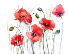 Delicate poppies Stretched Canvas 1134 by Wall Art Prints Watercolor Poppies, Watercolor Paper, Watercolor Paintings, Poppies Painting, Poppy Flower Painting, Flower Paintings, Flower Oil, Watercolors, Painting Prints