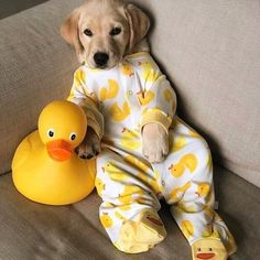 Any dogs and puppies that are cute. See more ideas about Cute Dogs, Cute puppies Tags: Super Cute Puppies, Baby Animals Super Cute, Cute Baby Dogs, Cute Little Puppies, Cute Funny Dogs, Cute Dogs And Puppies, Cute Little Animals, Cute Funny Animals, Cute Cats
