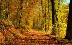 """Im #Herbst färben sich die Blätter rot, braun und gelb-golden. Von den Bäumen fallen #Kastanien - #Bucheckern und #Eicheln säumen die Wanderpfade. Macht euch auf den Weg, bevor der Winter die #Landschaft mit Schnee bedeckt, und genießt die Stimmung in den heimischen Wäldern und #Bergen :-) Entdeckt unsere neuen #Angebote passend für die """"goldene"""" #Jahreszeit - #GolfResortAchental #Wandern #Hotel #Urlaub #Wanderurlaub #Chiemgau #Chiemsee #Bayern #Natur #Nature"""