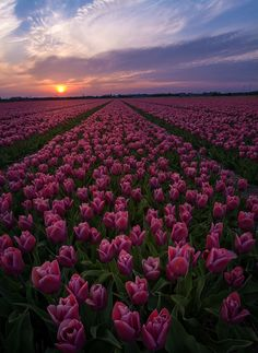 Sunset over the flowers by Jeremy Xhofleer on 500px