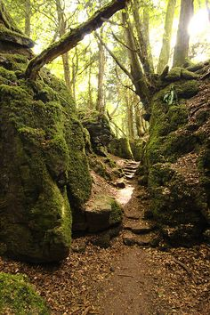 Puzzlewood, Forest of Dean, Gloustershire, UK