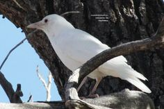 A white crow? Yup, this albino bird was spotted by our blogger SeEtta - learn more on the Birds and Blooms Blog.