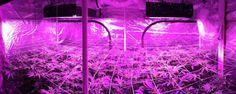 LED vs HPS Grow Lights - estagecraft LED Grow Lights