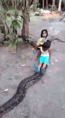 When there is nothing to do, then you need to ride a python