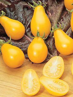 4th july tomato plant
