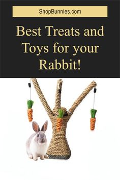 Best scratching tree for rabbits, enrichment and stimulation for your pet rabbit! best toys rated from 1-10 #bunnylovers Rabbit Toys, Pet Rabbit, Rabbit Information, Rabbit Eating, Wild Rabbit, Bunny Care, Cute Baby Bunnies, House Rabbit, New Toys