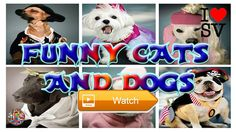 Funny cats and dogs in costumes A funny video Compilation HD SV Life  Funny cats and dogs in costumes A funny video Compilation HD Pls Like Share Comment and Dont forget to subscribe to our Channel SUBSCRIBE  on Pet Lovers