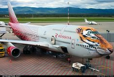 """Rossiya Airlines Boeing in the """"Amur Tiger Conservation"""" livery Airplane Design, Airplane Art, Aeroplane Flying, Tiger Conservation, Boeing 747 400, Aircraft Painting, Commercial Aircraft, Civil Aviation, Air France"""