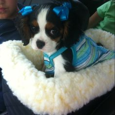 Shut the front door......absolute cuteness!! I think I jus' found Beau's girl!! :)