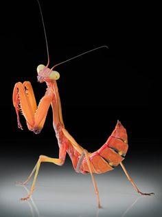 Excelentes fotos de insectos