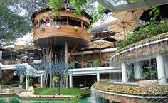 Ngôi nhà gỗ mọc lên giữa cây cổ thụ là ý tưởng cho quán cà phê rộng gần 6.000 m2 ở quận Gò Vấp, TP HCM.