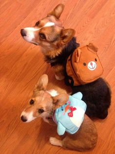 Maxthecorg and Rigby say...the only thing cooler than a corgi with a backpack? Two corgwn with backpacks!!