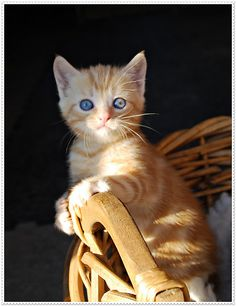 I never was a cat person, but lately I've been wanting a kitty. Maybe I'll have just one cat in my future.