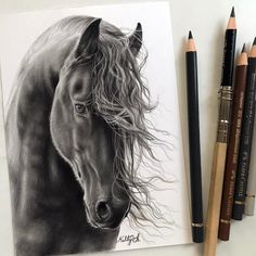The Horse with a beautiful head of hair.. Realism with Animal Portrait Drawings. By Kelly Lahar.