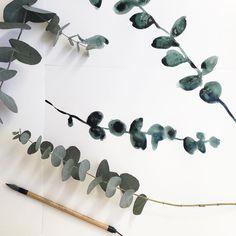 Botanical art by Jane Russell (@janerussell_illustration) on Instagram