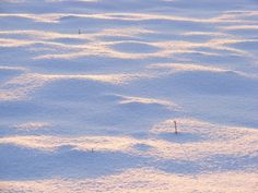 Blanket of Snow - Public Domain Photos, Free Images for Commercial Use