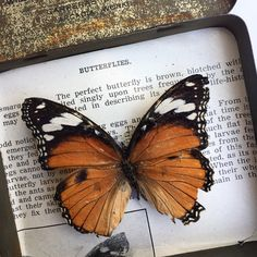Not all my butterfly are 'perfect', they have all been ethically sourced and died of natural causes... x