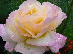 MIS FLORES: Mis Flores 2015