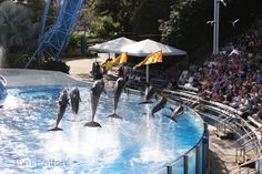 Sea World Dolphins jumping high at blue horizons show!