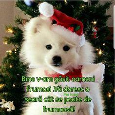 Anul Nou, Teddy Bear, Dogs, Christmas, Xmas, Pet Dogs, Teddy Bears, Doggies, Navidad