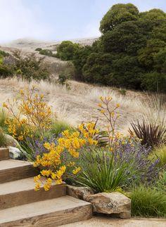 arterra landscape architects / legacy landscape garden, tiburon