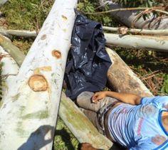 BLOG DO MARKINHOS: Jovem morre durante o corte de árvores no municípi...