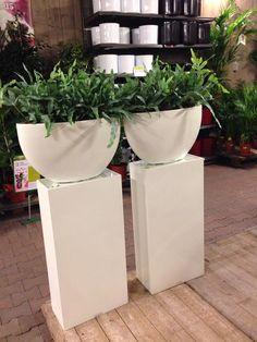 Intratuin pilaren plus planten.