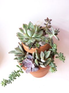 Tiered Terracotta Pot with Succulent Menagerie DIY by 2CraftyCougs