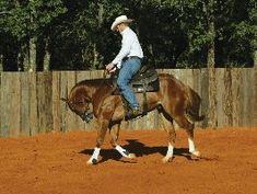 Body Control with Clinton Anderson. The 6 points to having control of your horse at head, neck, poll, shoulder, rib cage and hindquarters. This is good.