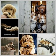 ♡A dog will teach you unconditional love. If you can have that in your life, things won't be too bad. I Love Dogs, Puppy Love, Cute Dogs, My Beautiful Friend, Beautiful Dogs, Collages, Color Collage, Mood Colors, Beautiful Collage