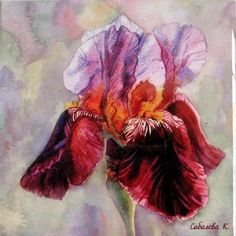 paintings of iris flowers - Yahoo Image Search Results Iris Painting, Feather Painting, Painting Flowers, Watercolor Flowers, Watercolor Paintings, Iris Art, Painting Ceramic Tiles, Wall Decor Pictures, Iris Flowers