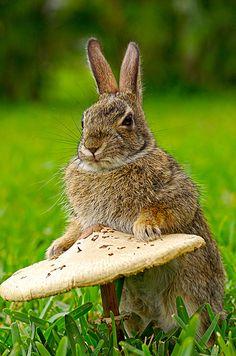 A Bunny Rabbit and a Mushroom Wild Rabbit, Bunny Rabbit, Rabbit Hole, Baby Animals, Funny Animals, Cute Animals, Beautiful Creatures, Animals Beautiful, Beautiful Boys