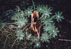 Tiny Stump - A small part of a tree, surrounded by other greens.