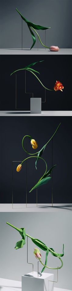 Postures by Carl Kleiner still life photography styling inspiration Ikebana, Floral Photography, Still Life Photography, Photography Ideas, Flower Shape, Flower Art, Flower Installation, Arte Floral, Flower Fashion